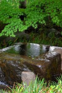 Nikon Digial Camera かえで=楓=Sapindaceae Acer