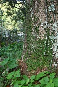 Nikon Digital Camera 椰子の幹と蔦植物=やしのみきとつたしょくぶつ