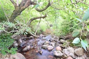 Nikon Digital Camera 夏と小川=なつとおがわ=Summer&the Stream