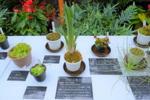 Nikon Digital Camera 食虫植物=しょくちゅうしょくぶつ=Insectivorous Plants ※植物園の食虫ちゃんたち☆お手入れレベルが凄すぎますね(^^;尊敬です。