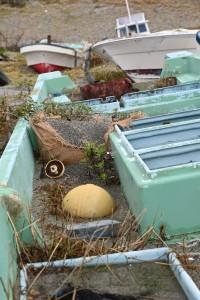 Nikon Digital Camera 磯菊と丸葉茱萸とイネ科植物=いそぎくとまるばぐみといねかしょくぶつ