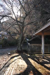 Nikon Digital Camera D700 冬支度の桜の木
