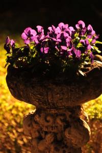 Nikon Digital Camera D700 パープルパンジー☆ ※店頭に並んでいる、いつものパンジーちゃんも、飾る器と場所によっては中々な雰囲気になるなぁと思った鉢でした(^^; 一度植え込むと、花の咲く期間が非常に長いので、少し凝って飾ってみる年があっても良いかもですよね♪
