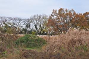Nikon Digital Camera D700 冬の装い=ふゆのよそおい ※場所:荒川・彩湖公園