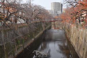 Nikon Digital Camera D700 桜の冬支度=さくらのふゆじたく ※石神井川※