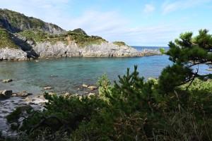 Nikoln Digital Camera 実生の植物と朝の入り江=みしょうのしょくぶつと朝の入り江