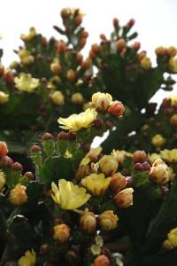 Nikon Digital Camera D700 さぼてんの花☆