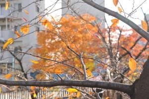 Nikon Digital Camera D700 サクラとハゼの木の冬支度☆