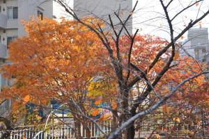 Nikon Digital Camera D700 櫨の木=はぜのき ※紅葉が美しい品種として有名な本種☆ウルシ科ウルシ属の落葉広葉小高木という約10mくらいにまで伸びる樹木です。 春には新緑。初夏にはお花。秋は紅葉。冬は落葉と四季折々に楽しませてくれます♪ ※場所:北大塚・空蝉橋近く