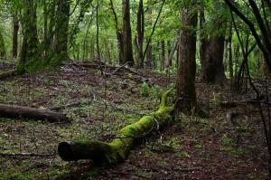 Nikon Digital Camera 雨の原生林=あめのげんせいりん=Rain Forest