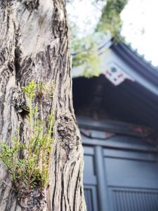 OLYMPUS DIGITAL CAMERA E-PL6 杉の新芽☆