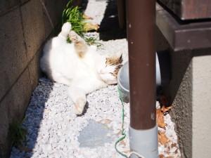 OLYMPUS DIGITAL CAMERA E-PL6 裏路地のネコちゃん